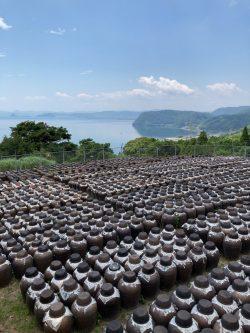 20210717『鹿児島黒酢・甕酢 朝の黒酢畑』